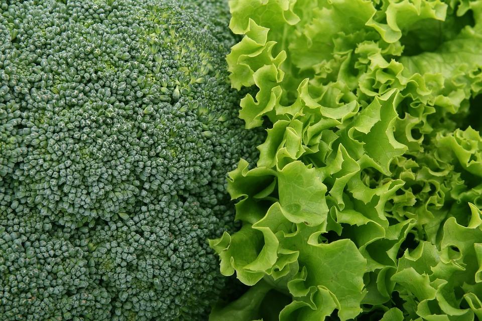 Broccoli 1239430 960 720