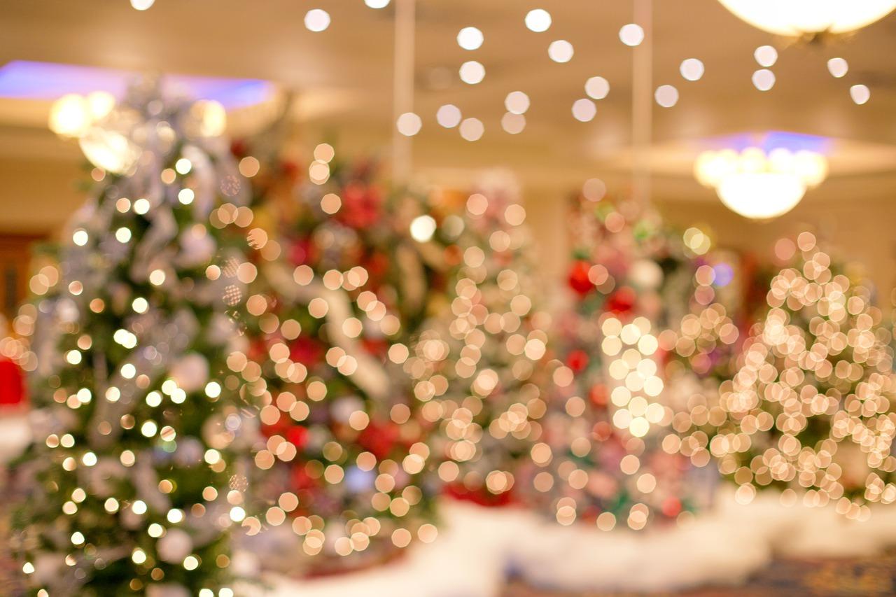 Christmas Trees 4647375 1280