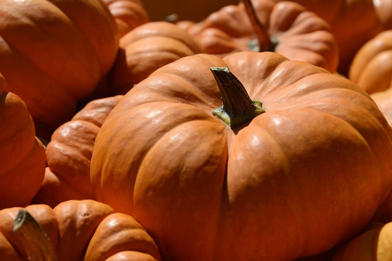 Pumpkin 3680857 1280
